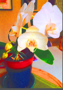 JIM'S ORCHID ALTERED